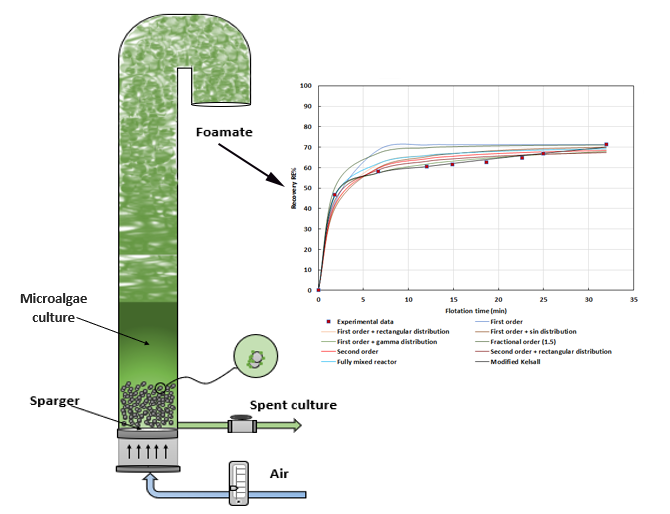 Kinetic Study of Air Bubbles-Cetyltrimethylammonium Bromide (CTAB) Surfactant for Recovering Microalgae Biomass in a Foam Flotation Column