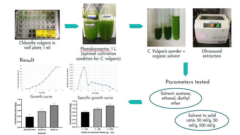 The Effects of Solvents and Solid-to-Solvent Ratios on Ultrasound-Assisted Extraction of Carotenoids from Chlorella vulgaris
