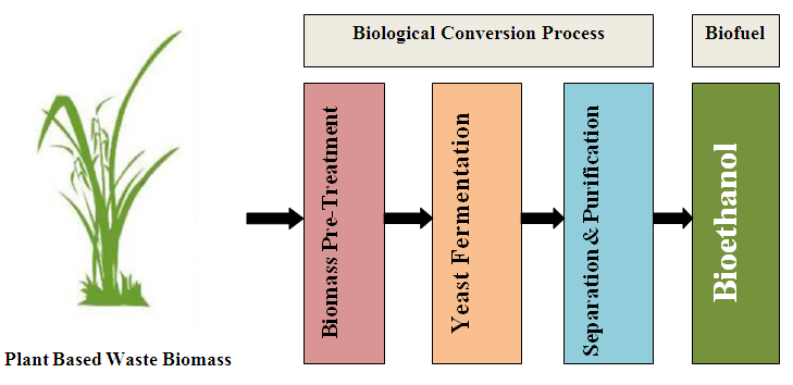 A Review of Bioethanol Production from Plant-based Waste Biomass by Yeast Fermentation